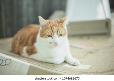 pretty ginger tabby cat resting on a cardboard box in the garden