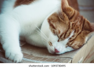 pretty ginger tabby cat sleeping on a cardboard box in the garden