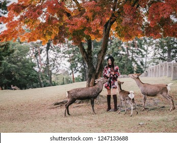 Pretty girl feeds with deer biscuit at Nara wild deer in a public park of Nara, Japan.  Tourism and travel concept. Spring rain day.