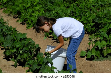 Pretty girl picks vegetables on the farm