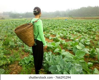 pretty girl with standing in lettuce farm.