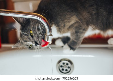 Pretty gray cat watching the water from the tap