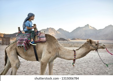 Pretty kid in a checkered keffiyeh rides an arabian camel with a colorful saddle in the desert on the background of mountains and sunny sky. He wears a blue T-shirt, pants with patterns and sneakers.