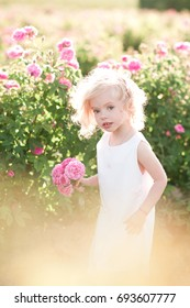 Pretty kid girl 4-5 year old holding flowers in field. Looking at camera. Summer time.