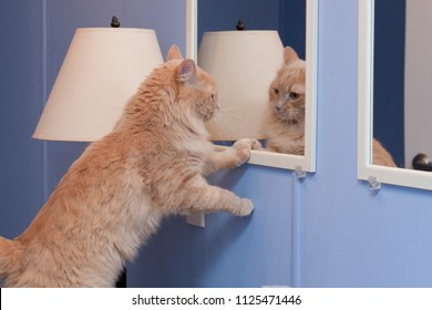 A pretty kitty admires its on point look in the mirror