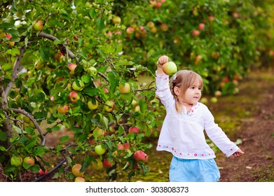 pretty little girl picking fresh organic apples on a farm