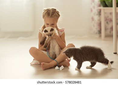 Pretty little girl with pigtails in a dress plays with a kitten in the rope. Children and animals.