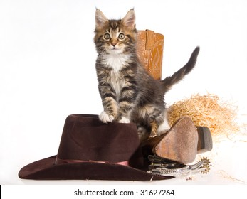 Pretty Maine Coon with cowboy boots, hats, spurs, straw on white background