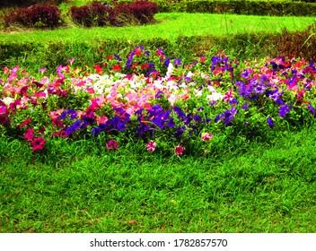 Hübscher Blumengarten mit bunten Farben.