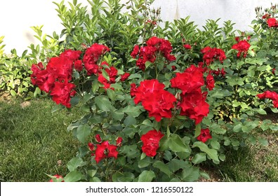 Pretty manicured flower garden with colorful.red.flowers.backraund.