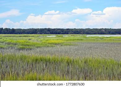 A pretty marsh landscape in Hilton Head, South Carolina