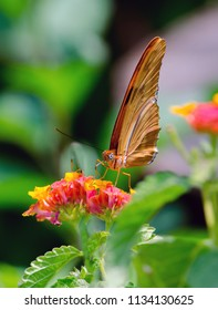 pretty orange butterfly rests on bright orange and yellow flowers in a Michigan USA garden
