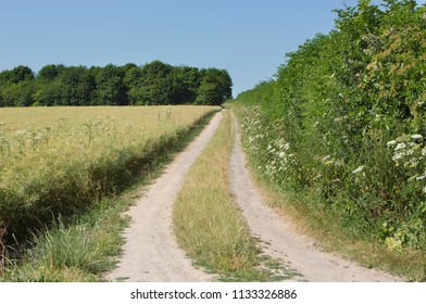 Pretty and  peaceful country off-road lane or path through wooded farmland in summer used for recreational cycling and walking or rambling at Worthy Down near Winchester in Hampshire, England, UK