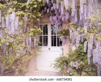 Pretty Pillnitz There's always a magical feeling with Wisteria