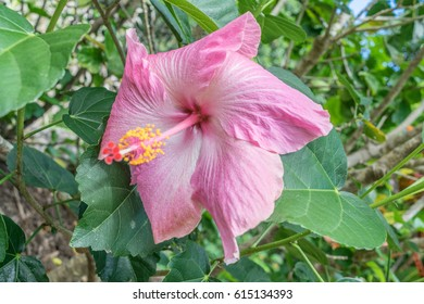 Droopy Plant Images Stock Photos Vectors Shutterstock