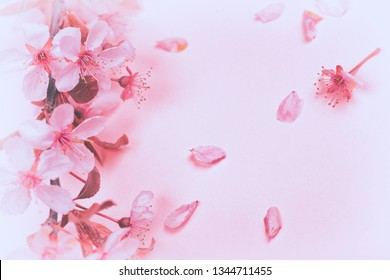 Pretty Pink Plum or Cherry Blossoms on Pastel Pink Card Background with room or space for copy, text or your words.  Horizontal flat lay that works as vertical
