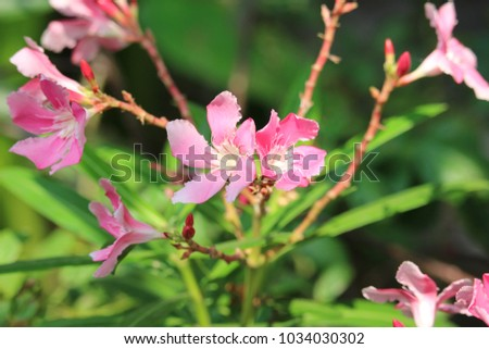 Pretty pink tropical flowers stock photo edit now 1034030302 pretty in pink tropical flowers mightylinksfo