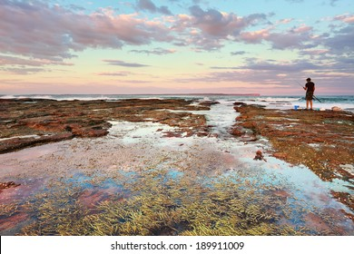 Pretty pinks cast a soft hue over the coastal landscape at  sunset, Plantation Point, Vimcentia  NSW Australia.  Rockpool with seaweed in foreground