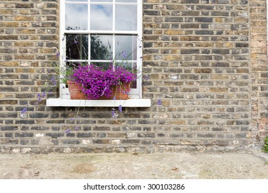Pretty Purple Flowers in Window Box of Brick Town House