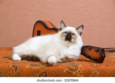 Show+quality+ragdoll Images, Stock Photos & Vectors