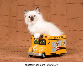 School Bus With Animals Stock Photos, Images & Photography