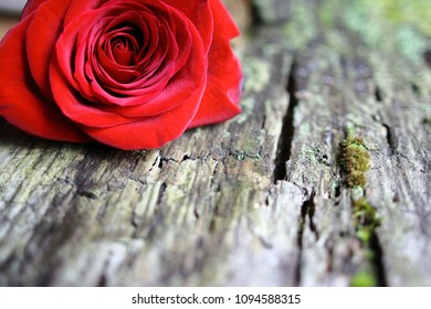 Pretty Red Rose On Natural Background