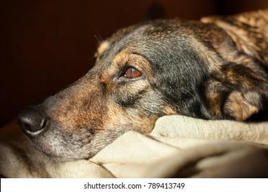 Pretty sad dog with sad eyes