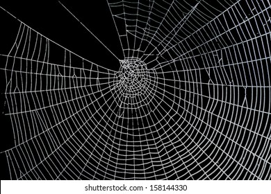 Pretty scary frightening spider web