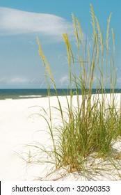 Pretty sea oats blowing in seashore breeze