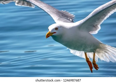 Pretty seagull flying on a close-up shot