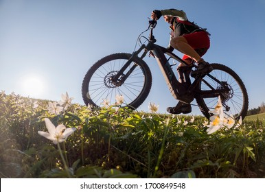 pretty senior woman riding her electric mountain bike in early springtime in the Allgau mountains near Oberstaufen, in warm evening light with blooming spring flowers in the Foreground
