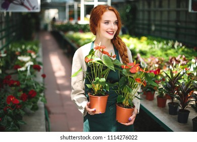 Pretty smiling florist in apron standing with two flowers in pots and dreamily looking aside in greenhouse