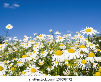 Pretty summer field carpeted with wild daisy's. Shallow depth of field.