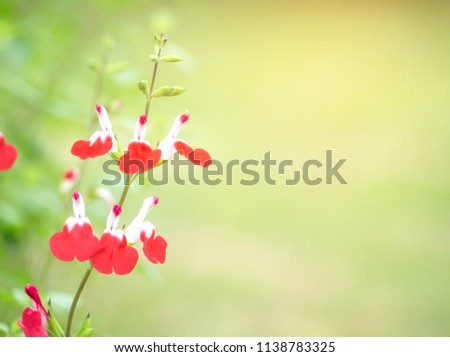 Pretty Sweet Small Red White Flowers Stock Photo Edit Now