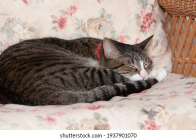 A pretty tabby cat taking a nap on a wicker chair with flowered cushion