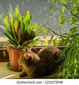 pretty tabby domestic cat chills in the sun on the windowsillIndoors