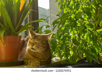 pretty tabby domestic cat lounging in the sun on the windowsillIndoors