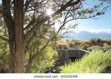 pretty Tree on a small river with many bushes nevada usa with a beautiful view to landscape to rest