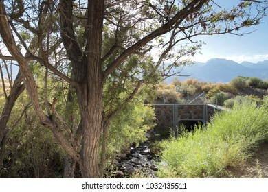 pretty Tree on a small river with many bushes nevada usa with a beautiful view to landscape to rest after road trip