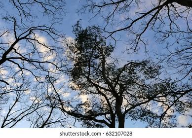 pretty trees silhouettes