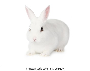 Pretty white fluffy Bunny isolated on white background