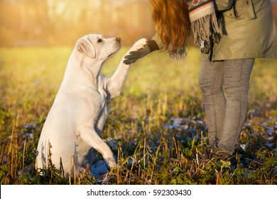 pretty white labrador retriever dog and woman give each other a high five