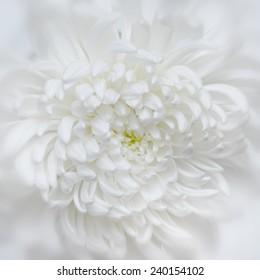 Blurry white flower close petal white stock photo edit now pretty white wedding flower mightylinksfo