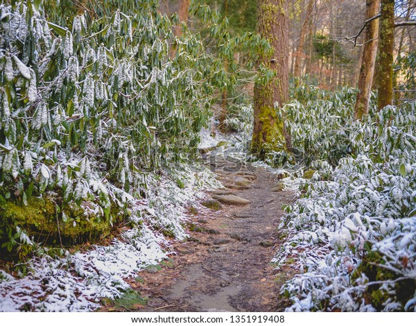 Pretty winter forest hiking trails.