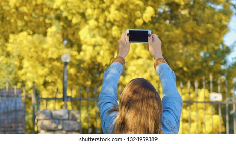 Pretty woman using smartphone and makes selfie against mimosa tree with flowers on blue sky and sunny day