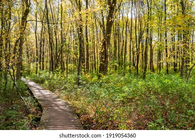 Pretty wooden boardwalk path winding through a green forest dappled with sunlight in autumn