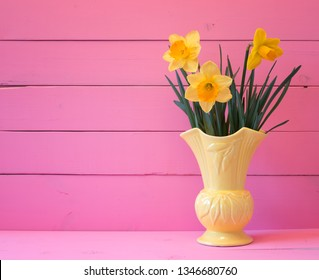 Pretty Yellow Daffodils in Bloom in Spring in Vintage Vase on Bright Pink Wood Board Background with room or space for copy, text or words.  Horizontal side view