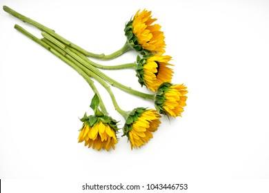 Pretty yellow sunflowers arranged from the left corner and set on a white background.