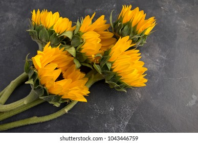 Pretty yellow sunflowers arranged on a slate look background.