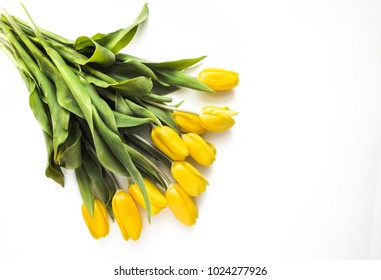 Pretty yellow tulips on a white background with copy space.